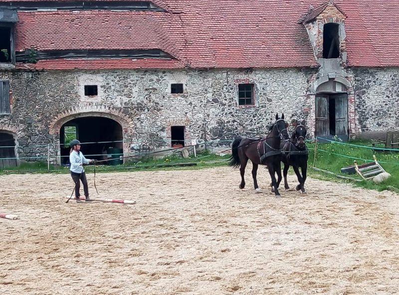 Kvinna tömkör ett par bruna lippiznerhästar på en sandplan. I bakgrunden syns en äldre murad byggnad med rött tegeltak